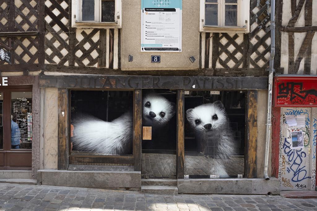 Commerce du 8 rue Pont aux Foulons, et ses hermines, à Rennes !